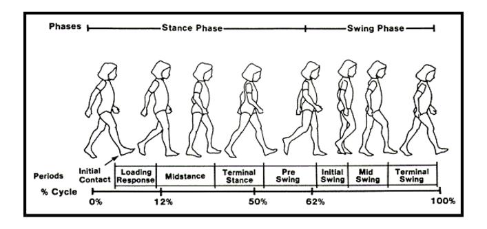 gait cycle smart insole – Gait analysis  analysis of gait  running ...